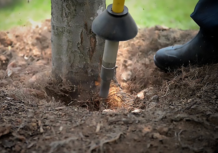 How to tell if your tree is planted too deep.